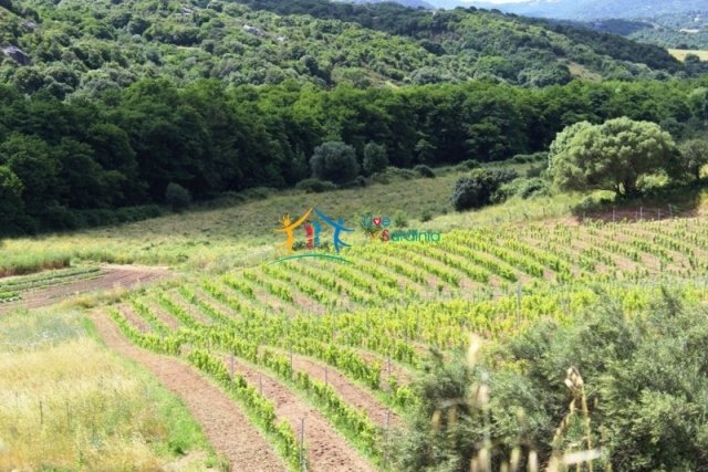 Rural Resort for Sale With 9 Bedrooms and 9,5 Ha Land Near Luogosanto, North East Sardinia