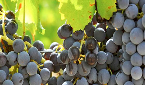 Sardinian Winery