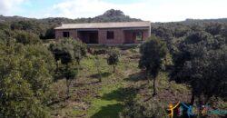 Unfinished Villas For Sale Aglientu Near Santa Teresa di Gallura ref. Mannucciu