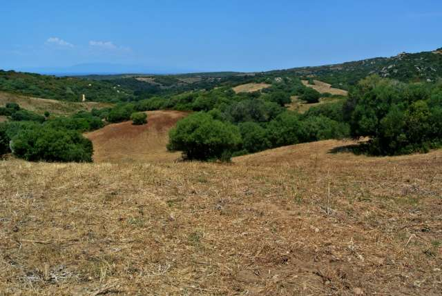 ATTRACTIVE 8.2 HA LAND WITH SEA VIEWS AND BUILDING POTENTIAL FOR SALE IN AGLIENTU, 8 KM FROM THE SEA,NORTHERN SARDINIA