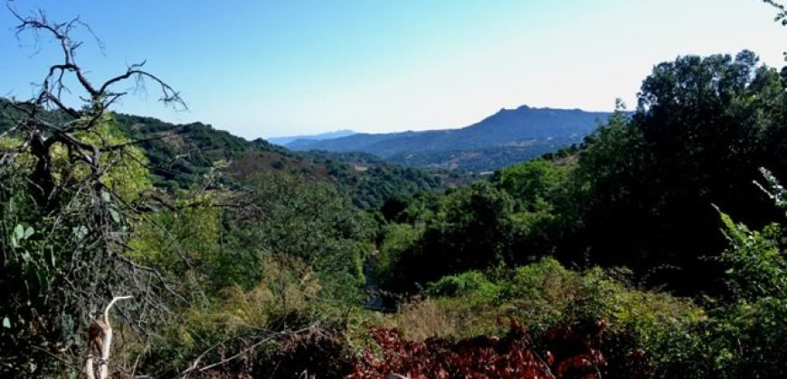 3,6 Ha Land and 280 M2 Farmhouse for Sale in Medieval Luogosanto, 20 Km from the Sea, North  Sardinia