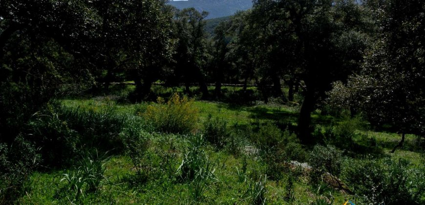 Unfinished 220 M2 Detached Home and 2,3 Ha Land for Sale in Calangianus, North East Sardinia