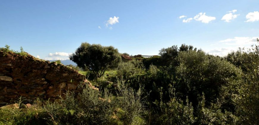 Stazzo For sale in Sardinia, Ref. Muriscu/ Pittulongu