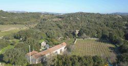 Vineyard And Farmstead For Sale In Sardinia. ref Lu Mocu